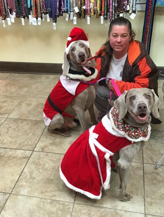 santa-dog-mrs-claus-its-a-dogs-life-pet-daycare